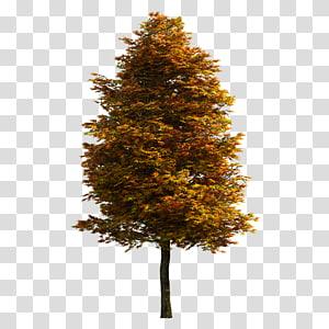 Arbre, arbre, arbre jaune et orange png