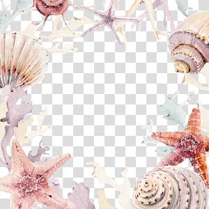 assortiments de coquillages, faire-part de mariage Seashell Beach Convite, corail de conque png