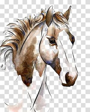 American Paint Horse peinture à l'aquarelle Les chevaux dans l'art équestre, cheval, illustration de cheval brun png