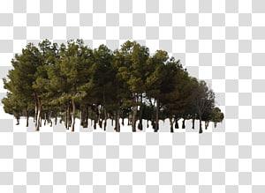 arbres verts animés, forêt de pins, forêt de jungle png