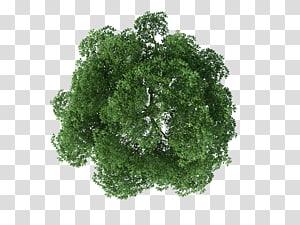 Rendu des arbres, vue de dessus d'arbre, d'arbre brun et vert png