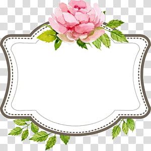 Mariage fiançailles, frontière de texte belle mariage étiquette, illustration de tableau blanc accent fleur rose png