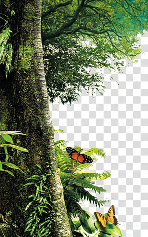 Arbre nature paysage peinture feuille, arbres de la forêt, orange et noir butterly png