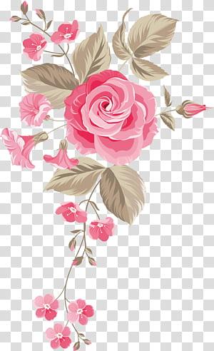 Roses de jardin Roses Centifolia Motif floral Fleurs coupées Bouquet de fleurs, Fond de fleurs peintes à la main, rose rose png