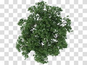 Tree Architecture Texture mappage, plan de l'arbre, gros plan arbre feuille verte png