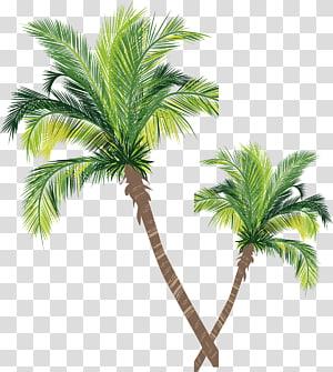 illustration de deux palmiers verts, palmier asiatique palmier à noix de coco euclidienne, matériau de la noix de coco png
