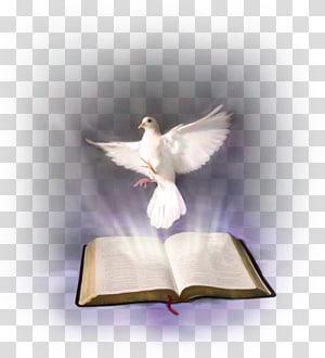 pigeon blanc et illustration de livre ouvert, Bible Saint-Esprit dans le christianisme Texte religieux, Sainte Bible png