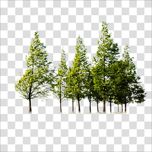 Arbre, arbres, arbres verts png