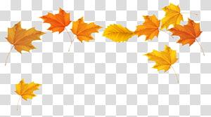 Couleur des feuilles d'automne, feuilles d'automne, feuilles d'érable brunes et jaunes png