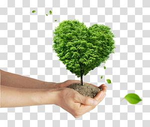 personne, tenue, boue, vert, feuille, plante, arbre, affiche, beau, vert, mains, donner, arbre png