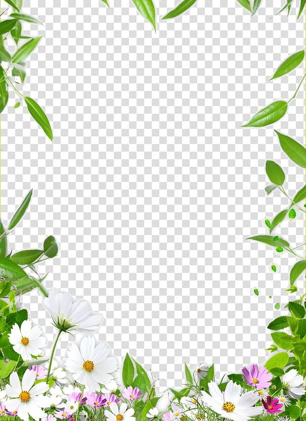cadre dessin plafond, bordure de fleur, illustration de fleur de cosmos blanc et rose png