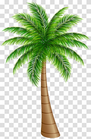 illustration d'arbre de noix de coco, Arecaceae Noix de coco, palmier grand png