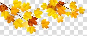 branche d'arbre feuille d'érable, fichier d'ordinateur automne, branche d'automne png