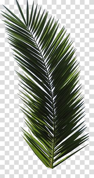T-shirt Design tropical Design graphique Logo, feuille de palmier, plante à feuilles vertes sur fond bleu png