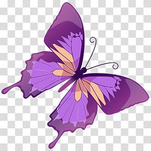 illustration de papillon violet, graphiques papillon euclidien illustration, papillon violet png
