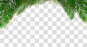 Arecaceae Tree Euclidean Leaf, fond de palmier, palmier png