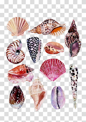 coquillage beaucoup, dessin aquarelle Art Nature Illustration, Conch Shell Beach png