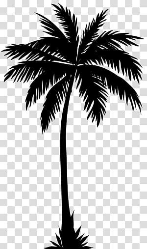 Silhouette d'Arecaceae, Silhouette De Palmier png