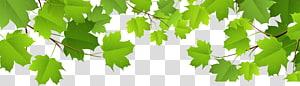 Feuille, feuilles décoratives, plante à feuilles vertes png