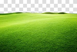 terrain de gazon vert, gazon artificiel terrain de sport Grass Grassland vert, avion vibrant vert jaune png