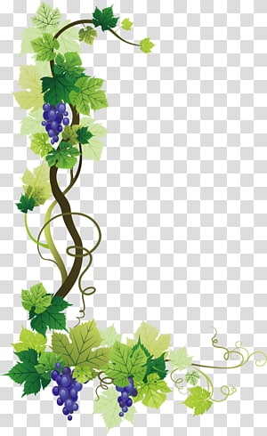 raisins pourpres, illustration, commun, raisin, vigne, vin, raisin, feuilles, raisin png