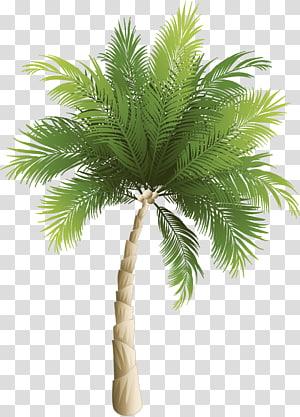 Illustration de cocotier vert, Arecaceae Coconut Phoenix canariensis, Cartoon cocotier vert png