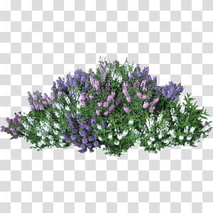 fleurs de couleurs assorties, arbuste fleur rose, buissons png
