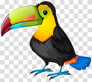 illustration d'oiseau à long bec noir et vert, caricature de perroquet Toucan oiseau, caricature de Toucan png