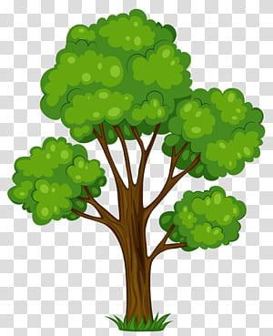 Caricature d'arbuste d'arbre, arbre vert peint, illustration d'arbre à feuilles vertes png