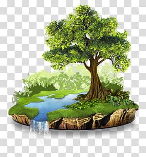 arbre vert près d'une rivière, Conservation Ressource naturelle Environnement naturel Nature, environnement naturel png