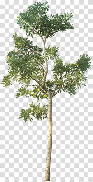arbre à feuilles vert, rendu architectural d'architecture de paysage, 20 Tree s (Free Cutouts) Pour Architecture, Paysage png