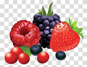Illustration de fruits de baies, fruits des bois, framboise, fraise et mûre png