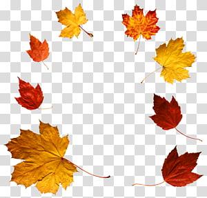 lot de feuilles d'érable orange et jaune, couleur de la feuille d'automne, feuilles d'automne png