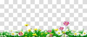 pétales de fleurs blanches, jaunes et roses sur l'illustration de l'herbe verte, Nature, fleurs en pleine floraison environnement naturel png