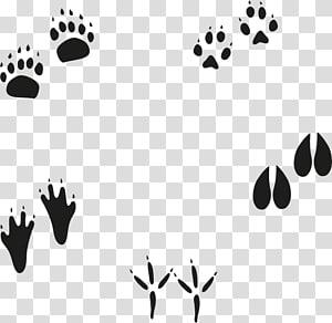 cinq pattes, empreinte animale euclidienne, empreintes png