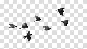 Vol d'oiseau vol d'oiseau, oiseaux png