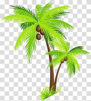 Arecaceae Noix de coco, palmier avec noix de coco, illustration de deux arbres à feuilles vertes png