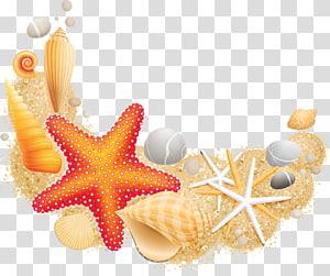 illustration de coquillages, coquille de mollusque étoile de mer vecteur, coquillage png