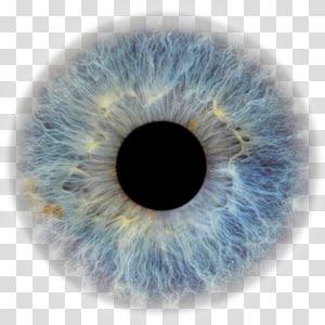 iris des yeux bleus, globe oculaire élève couleur des yeux yeux humain, yeux png
