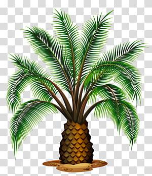 Illustration de plante de palmier vert, vin de palme Washingtonia filifera Washingtonia robusta Palmiers, petit palmier png