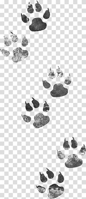 Dog Cat, empreintes de chien png