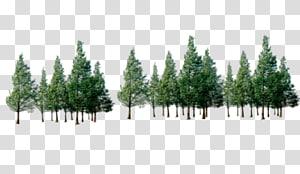 arbres à feuilles vertes, forêt d'arbres, arbres png