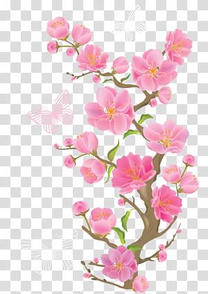 Fleurs roses, branche de printemps avec des papillons, papillons sur des fleurs png