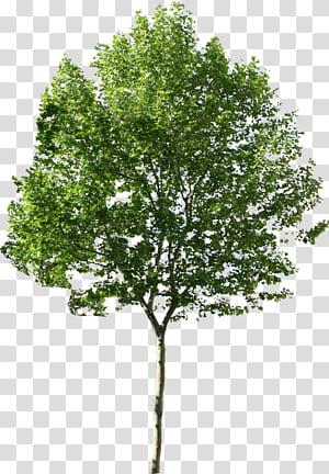 Tree Computer Icons, Tree disponible en différentes tailles, illustration de l'arbre à feuilles vertes png