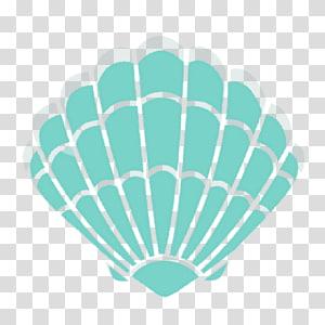 Illustration de coquille de palourde sarcelle, coquille de mollusque de palourde coquillage, coquillages png