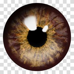 globe oculaire brun y, oeil fichier d'ordinateur icône brun, oeil png