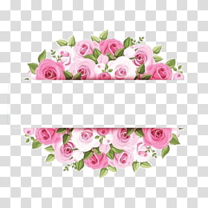 Fleur rose rose, bordure de fleurs aquarelle rose, oeuvre de rose rose png