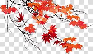 illustration de feuilles d'érable rouge, feuille d'automne couleur feuille d'érable, feuilles d'automne belle feuille d'érable png
