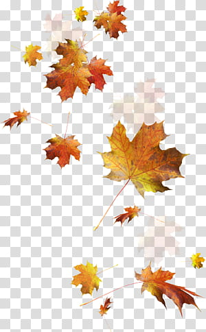 Feuilles d'automne Couleur des feuilles d'automne, feuilles tombantes, feuilles d'érable séchées png