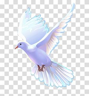 art de la colombe blanche, bible église chrétienne christianisme église apostolique, dieu png